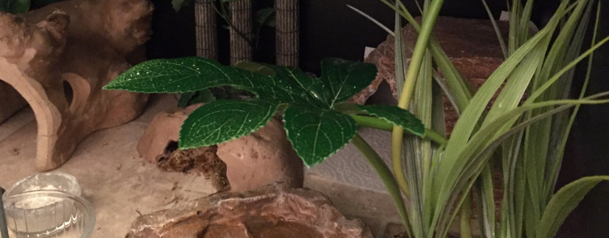 The lazy way to spot-clean your leopard gecko's vivarium