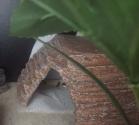 leopard gecko hacks
