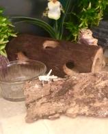Leopard gecko locust