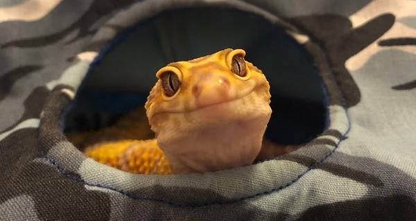leopard gecko tent, reptile tent