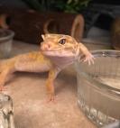 leoaprd gecko hacks
