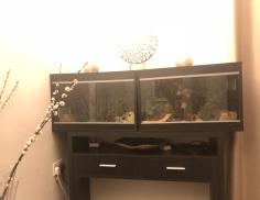 leopard geckos vivariums