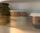 wax worms in fridge