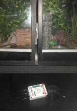 leopard gecko thermostat