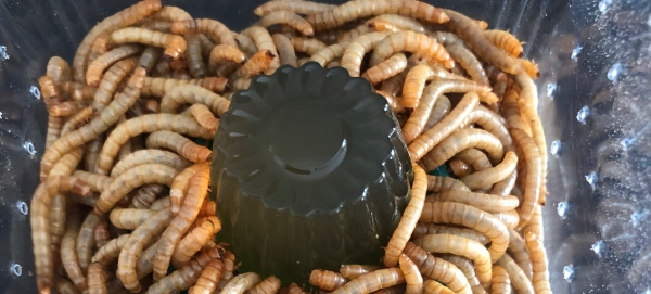 Bug Gel feeder insects