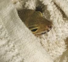 gecko towel
