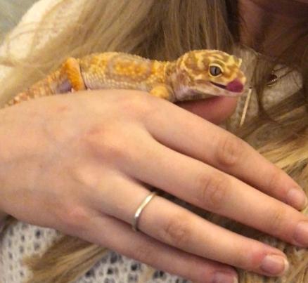 leopard gecko lick