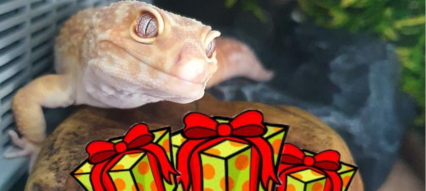 leopard gecko gifts